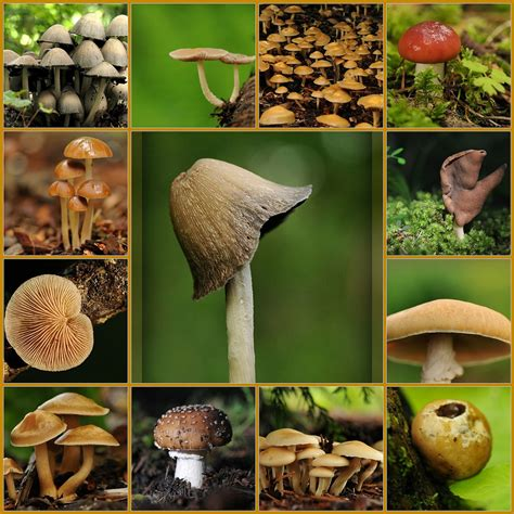 Mushrooms Types & Nutritional Value | Sweet Additions