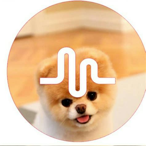 Musical.ly Logos | popsockets | Pinterest | Volteando ...