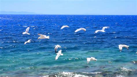 Musique Relaxante   Vidéo HD   Paysages, Nature ...