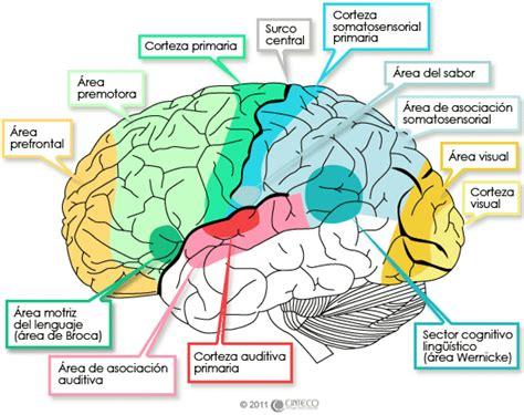 mutatis mutandis: La psicología fisiológica