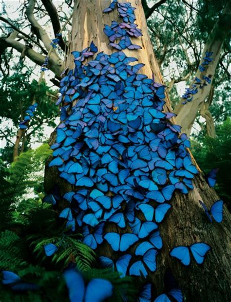My Blue Butterfly Tree   StyleFrizz
