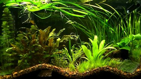 My Planted Aquarium (First Dirt Substrate) - YouTube