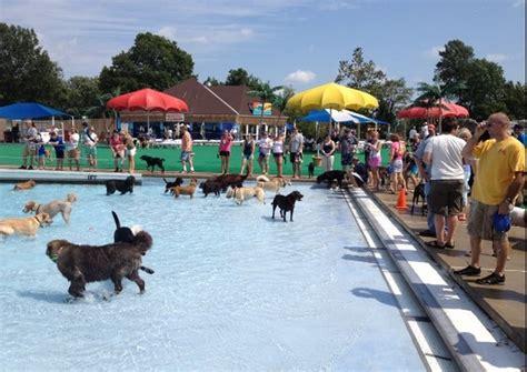 Nace el primer Aquapark canino de España – Alza la Pata