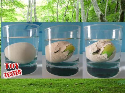 Nacimiento de dinosaurio de juguete | Huevo dinosaurio de ...