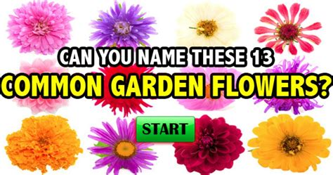Names Of Common Flowers With Pictures – savingourboys.info