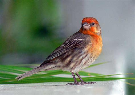 names of little birds Gallery