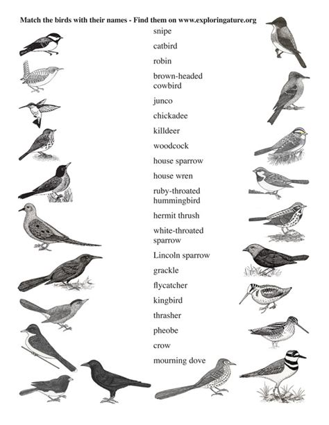 names of small birds Gallery