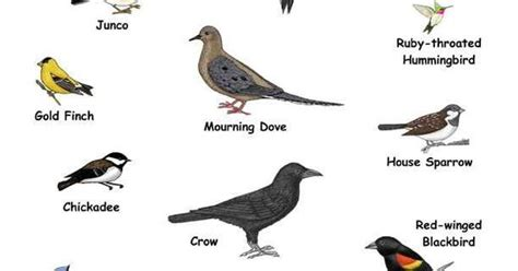 Names+of+Small+Birds | you can see these birds in your ...