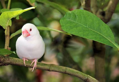 Names Of White Birds