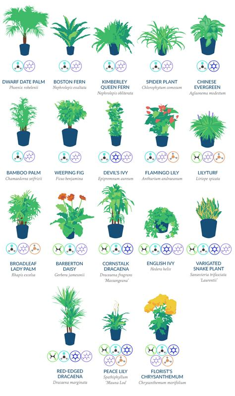 NASA RECOMMENDED: 18 PLANTS TO EFFICIENTLY CLEANSE THE AIR ...