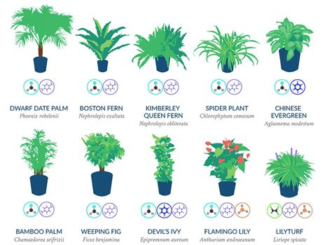 NASA Reveals A List Of The Best Air Cleaning Plants For ...