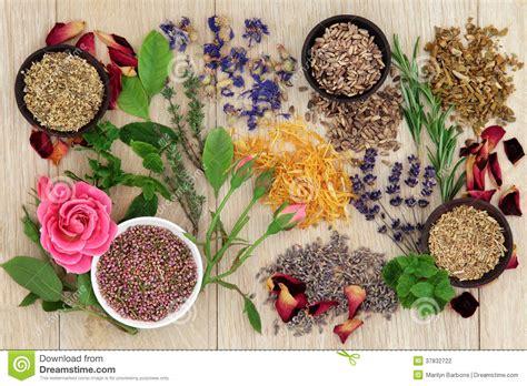 Natural Herbal Medicine stock photo. Image of naturopathic ...