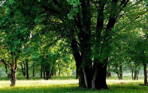 Naturaleza fondos de pantalla   Naturaleza fotos gratis