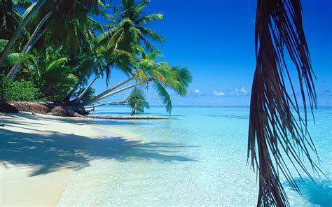 Naturaleza, paisaje, mar, playa, palmeras, arena, tropical ...