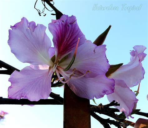 Naturaleza Tropical: 8 árboles con flores espectaculares ...
