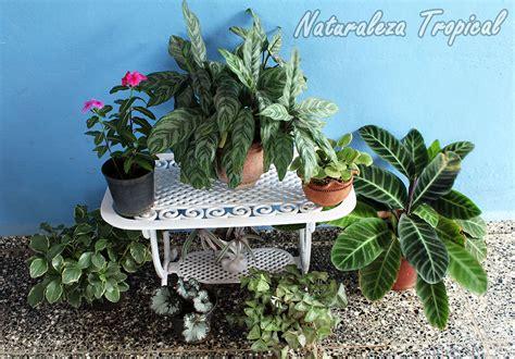 Naturaleza Tropical: Aspectos a tener en cuenta si quieres ...