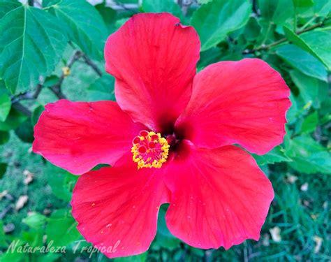 Naturaleza Tropical: Flores y características de plantas ...