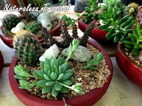Naturaleza Tropical: Manual para cultivar plantas ...