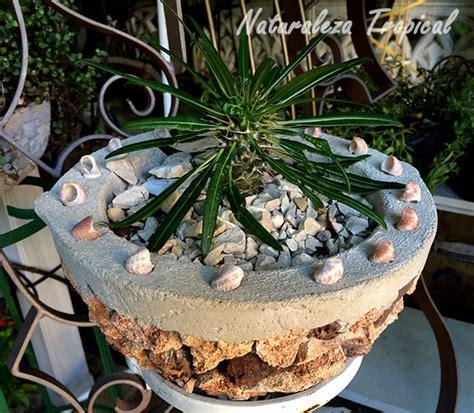 Naturaleza Tropical: Tipos de macetas para cultivar en ...