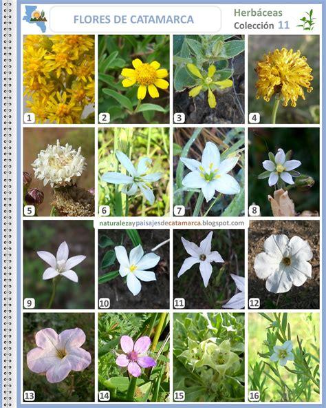 Naturaleza y Paisajes de Catamarca: Flores silvestres de ...