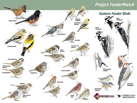 Nature Journal: Bird Watching Resources & Printables ...