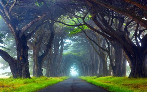 Nature Tunnel Of Trees Way Point Reyes National Seashore ...