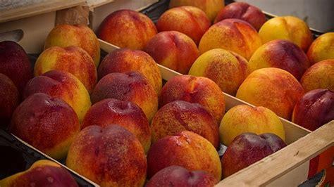 nectarina - El precio de la fruta
