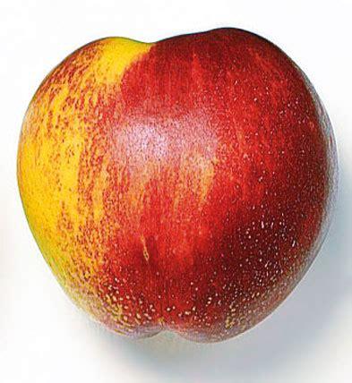 NECTARINA MENORCA - Sa Fruiteri@