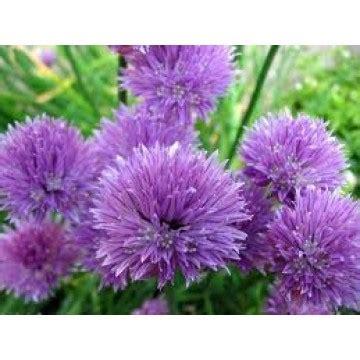 Nectarina | Plantones, plantas e injertos | 3094679 ...