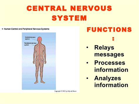 Nervous System Functions – defenderauto.info
