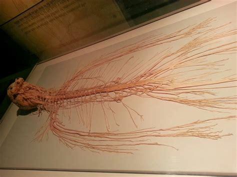 Nervous System Human Body – Dani's Decadent Deals