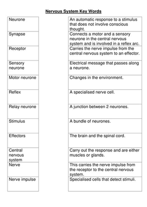 Nervous system key words worksheet by bobfrazzle ...