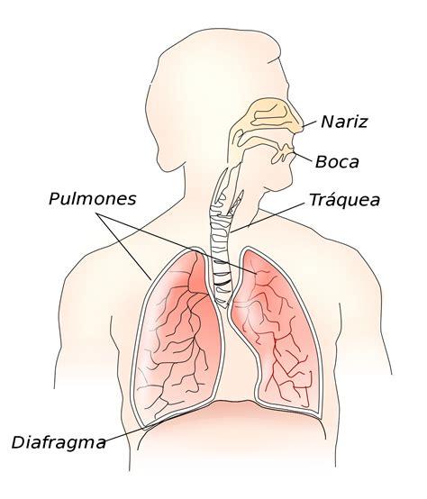 Neumología   Wikipedia, la enciclopedia libre
