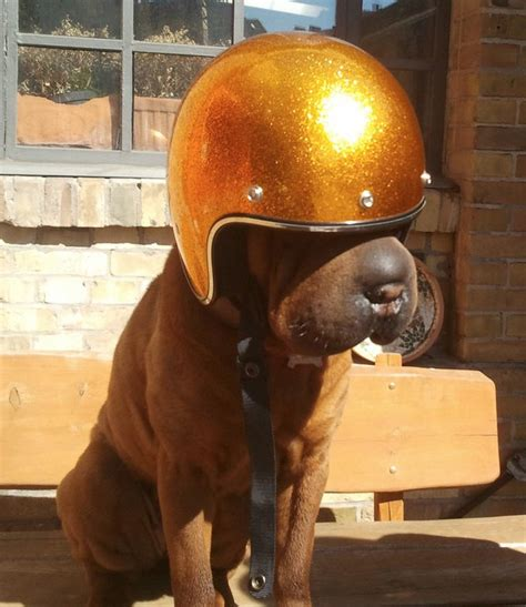 New Biltwell Blog: Dogs Rule