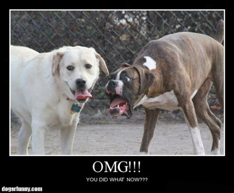News LOL TV: Funny dog posters
