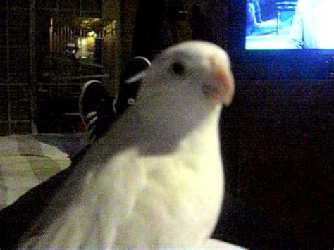 ninfa hablando (pollo2) | Doovi