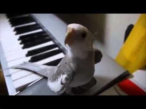 Ninfa Lolo cantando y hablando. | Doovi