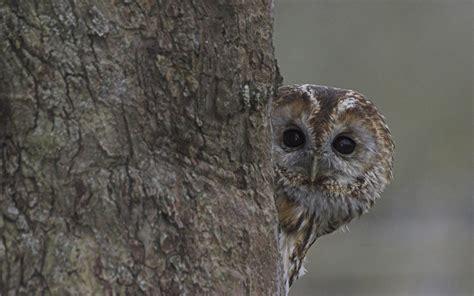 No Estuário do Tejo, à procura dos sons das aves nocturnas ...