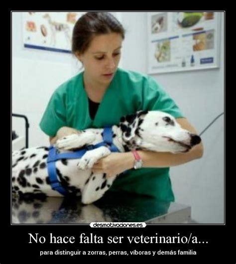 No hace falta ser veterinario/a...   Desmotivaciones