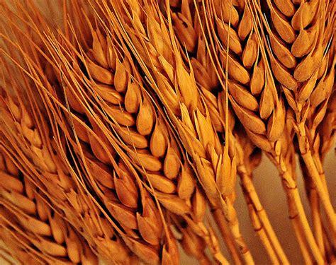 Nogger s Blog: EU Wheat Close
