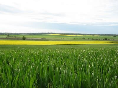 Nogger s Blog: New Crop Paris Wheat Jumps To 11 Month Highs