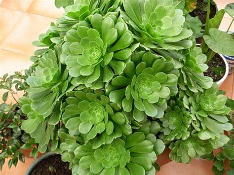 NOMBRE DE ESTA PLANTA. | Cuidar de tus plantas es ...