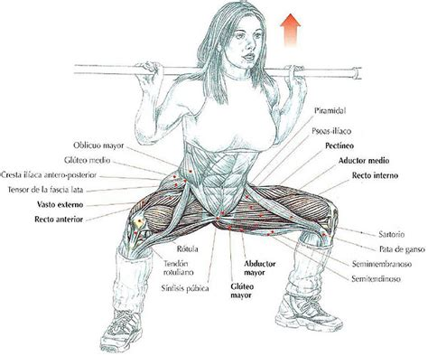 Nombre de musculos de las piernas - Imagui