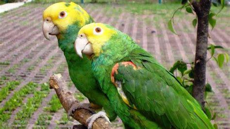 Nombre para aves hembras populares y sus significados ...