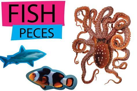 Nombres animales en inglés y en español