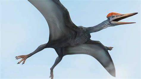 Nombres de dinosaurios voladores y sus características ...