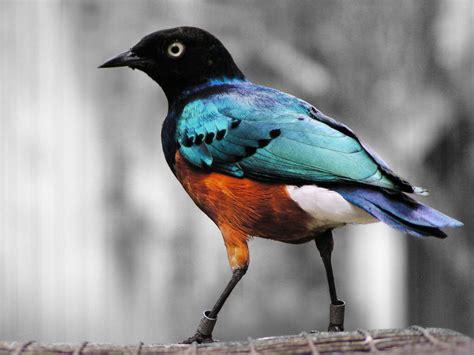 Nombres de pájaros y sus significados ¿cuál prefieres?