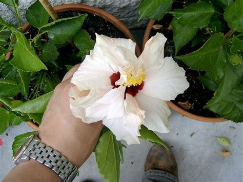 nombres de plantas sin flores  3  | Cuidar de tus plantas ...