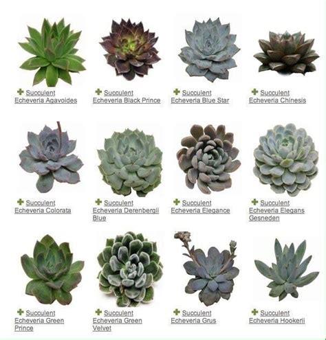 Nombres de Suculentas comunes | Plantas y sus nombres ...