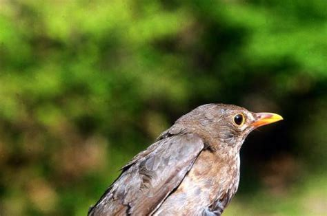 Nombres para pájaros 【SÚPER ORIGINALES】